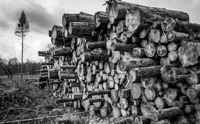#WeeklyBoys - Woche 14 - Da wo mal Wald war